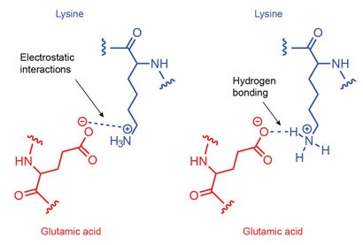 Electrostatic interactions and hydrogen bonding